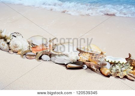 Tropical Shells On A Beach