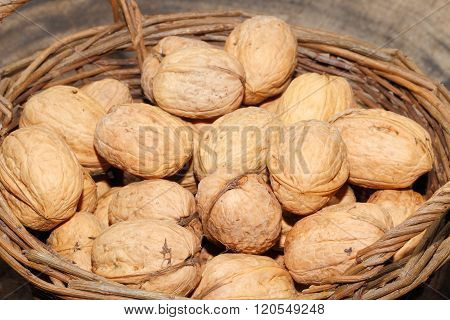 Freshly harvested walnuts in a basketon a wooden board