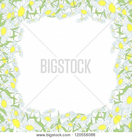 wild chrysanthemum flowers frame, beautifu flowers vector