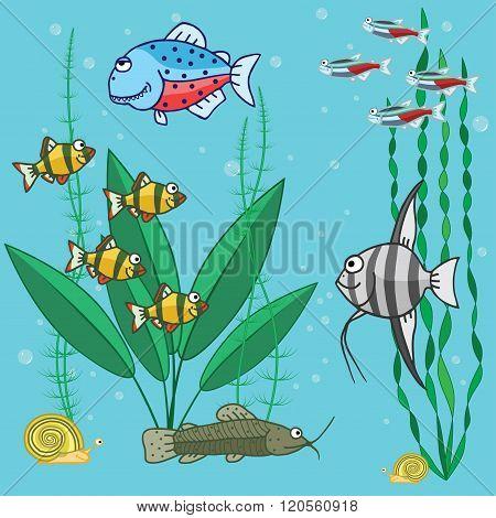 aquarium fish with plants