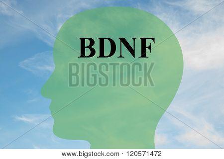 Bdnf Concept
