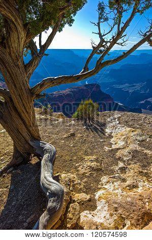 U.S.A. Arizona, the Grand Canyon South Rim,