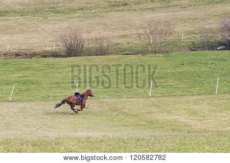 Horse Running In Gallopp Over The Green Meadow With Saddle