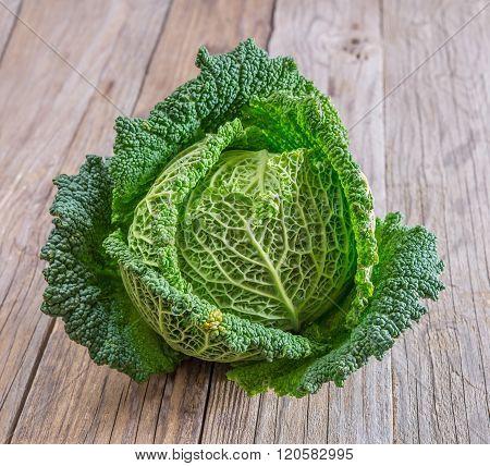 Savoy Cabbage On White Background