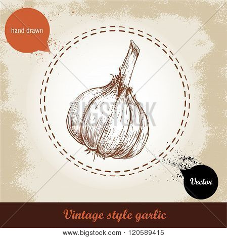 Vector hand drawn illustration with spice garlic isolated on grunge old background. Organic food ill