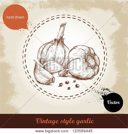 Vector hand drawn illustration with spice garlics and black peppercorn isolated on grunge old backgr