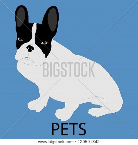 Pet Dog Icon Flat Style