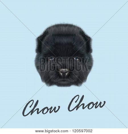 Chow Chow Puppy portrait
