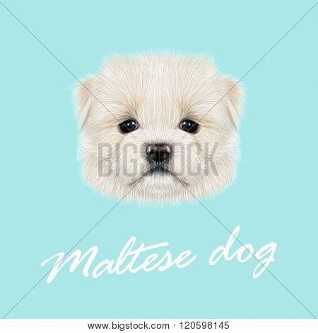 Maltese puppy portrait.