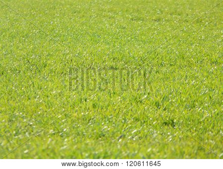Green field on spring - no  other object
