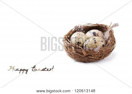 Quail eggs in a nest with feathers and willow branch on a white background for Easter with copy spac