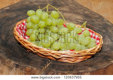 Freshly harvested grapes in a basketon a wooden board