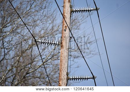 electric insulators on a wooden utility pole
