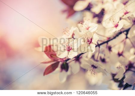 Blossom of the tree
