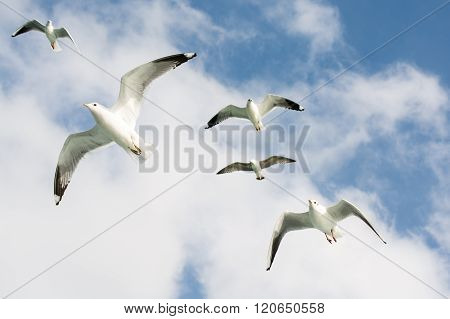 A group of Seagulls flying in sky