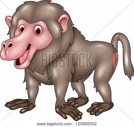 Cartoon funny baboon isolated on white bacjground