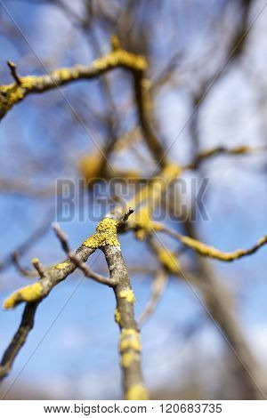 Walnut Branches With Selective Focus