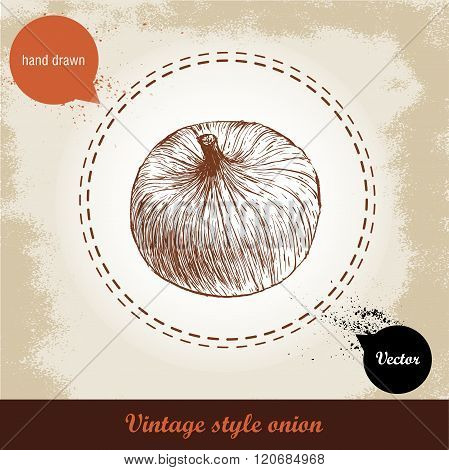 Onion hand drawn illustration. Vintage retro background with hand drawn sketch onion. Herbs and spic