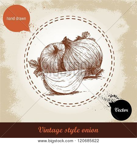 Onion hand drawn illustration. Vintage retro background with hand drawn sketch onions. Herbs and spi