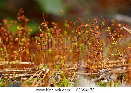 Moss Seeds