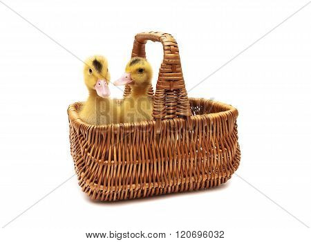 Ducklings Sitting In A Basket On A White Background