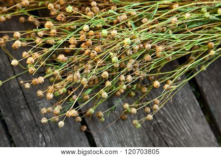 Flax Crop