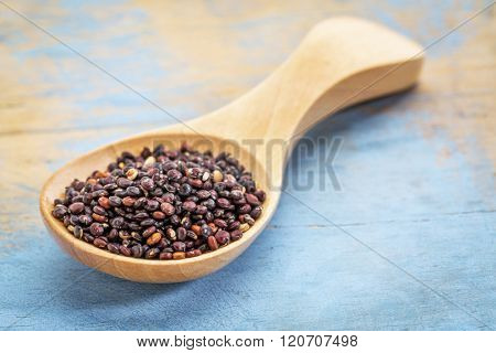black quinoa grain on a wooden spoon against blue painted grunge wood