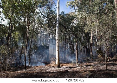 Controlled Fire Burn