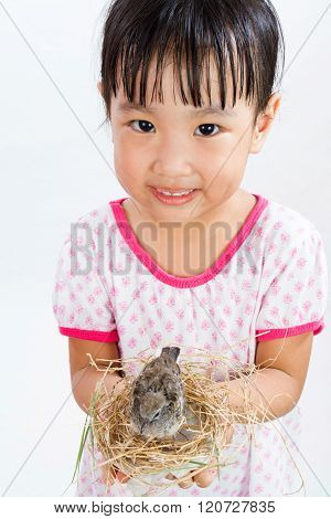 Asian Little Chinese Girl Holding Small Bird In Hands