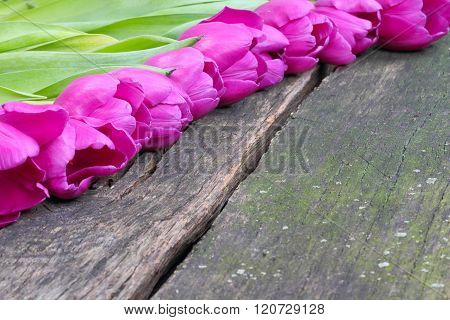 Tulips On Old Wooden Board