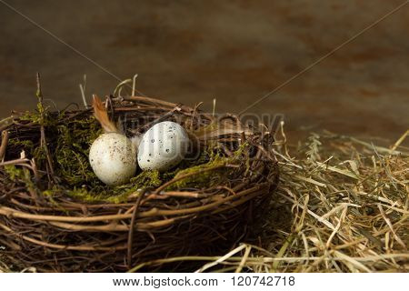 Small speckled bird's eggs lying in a nest
