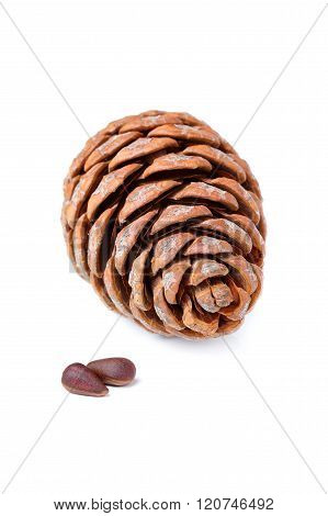 Cedar Cone With Nuts Isolated.