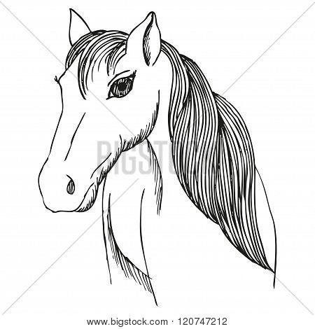 Hand drawn horse with long mane and bang