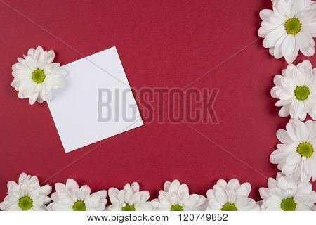 white flowers on the red texture  background