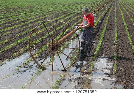 Agricultural Scene, Farmer Or Agronomist Inspect Paprika Field