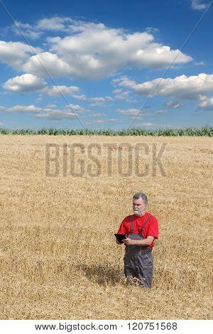 Agricultural Scene, Farmer Or Agronomist Inspect Wheat Field