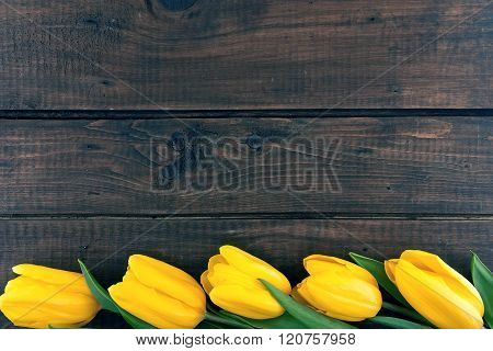 Row Of Yellow Tulips On Dark Rustic Wooden Background. Spring Flowers. Spring Background. Valentine'