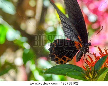 Dark Butterfly On Flower
