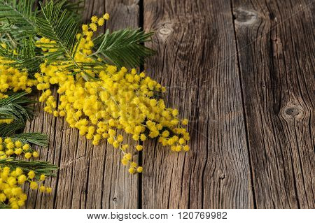 Easter Time, Yellow Mimosa Flowers On The Old Table
