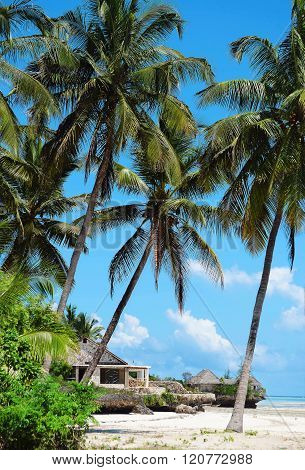 Palm Trees On Zanzibar Beach