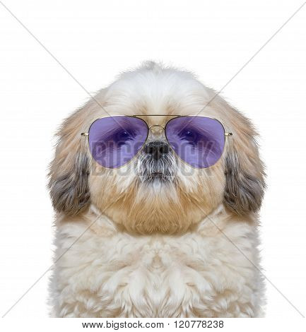 Cute Dog Is Wearing Fashionable Glasses