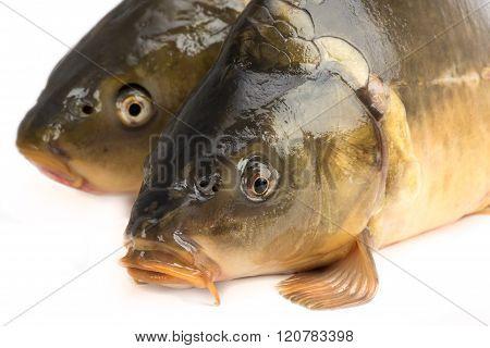 Mirror Carp - Weighing 3 Pounds Of Fish