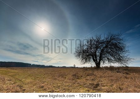 Early Spring Meadow Landscape In Poland.