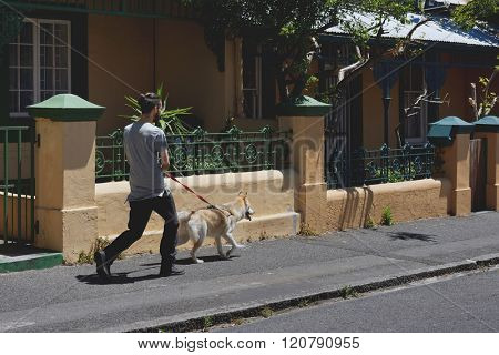 Man walking his dog, part of daily routine exercise for pet husky