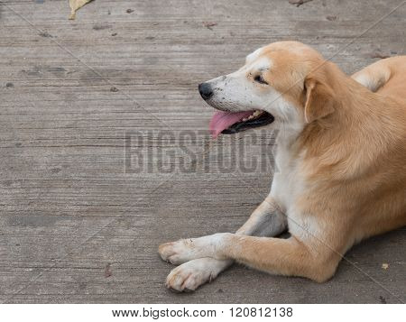 Gentle brown dog sit at the street. Copy space
