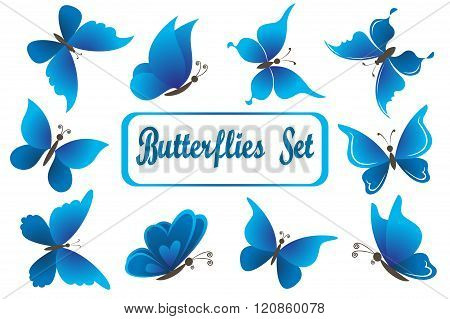 Blue Butterflies Isolated