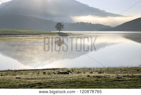 Alone tree in lake in sunny day ** Note: Soft Focus at 100%, best at smaller sizes
