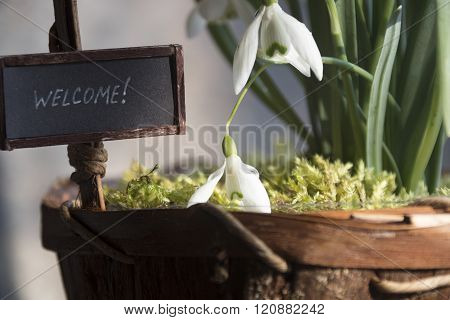 welcome hand lettering text and snowdrops