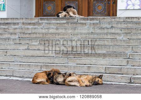 Sleeping Wild Dogs