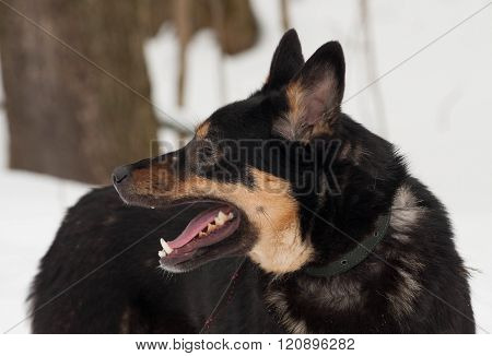 Black And Gray Mongrel Dog Standing On Snow